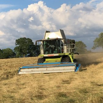 Harvesting grass seed with a stripper header