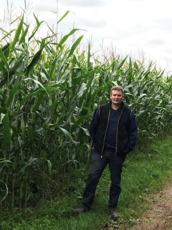 Perez maize seed