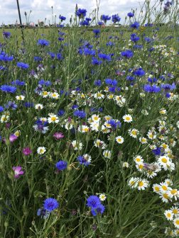 For any of your Wildflower requirements give us a call.