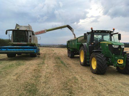 Harvesting Nifty PRG for DLF Trifolium.